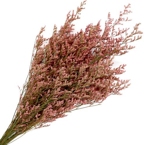 미스티블루 분홍색 프리져버드