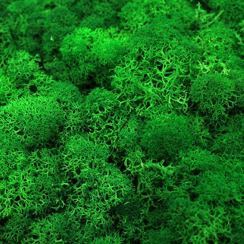 모스이끼 초록 D-05-019
