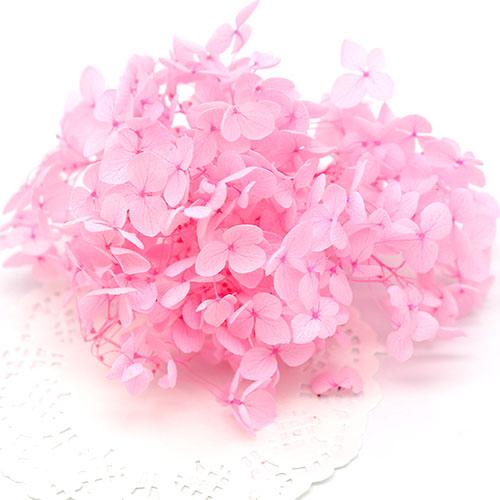 분홍 프리져버드수국 F-04-010