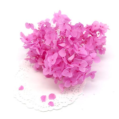 핑크 프리져버드수국 F-04-021