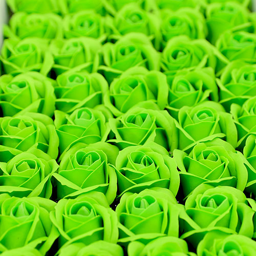 녹색 비누장미 50송이 한박스 꽃대미포함