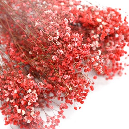 빨강안개꽃 프리져버드플라워  듬뿍한단
