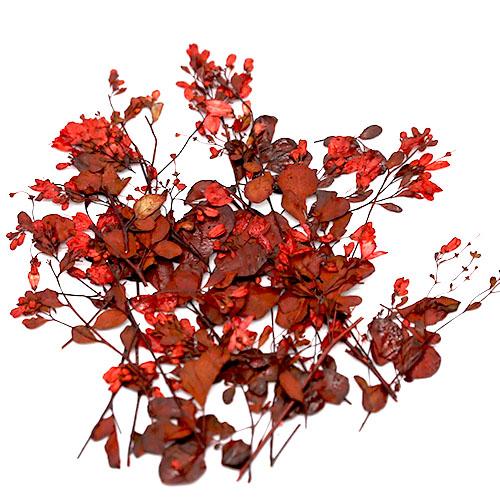 야생화줄기 빨강 건조압화 25줄기
