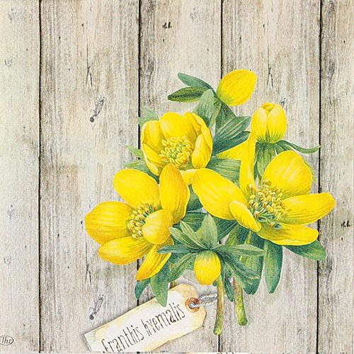 겨울바람꽃 냅킨 K-27-038