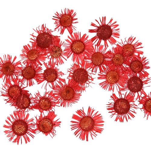 개망초 빨강 2cm 압화 25개 A-07-036